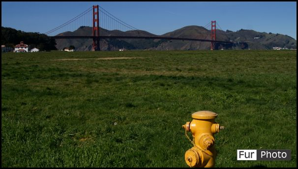 Wallpapers - Fur Photography - Golden Gate, San Francisco, California, USA